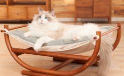 おしゃれ猫ベッドなどを贈呈、写真展「ねこのひょっこり展」の賞品が決定