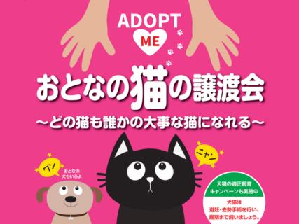 名古屋市動物愛護センター「おとなの猫」を対象にした譲渡会を毎日開催中