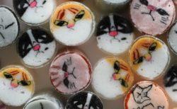 パパブブレが3種類の猫キャンディを公開!2月4日から一般販売されるニャ