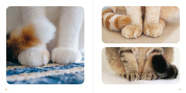 座っている猫の手の拡大写真 by 写真集「もっと ねこのおてて」