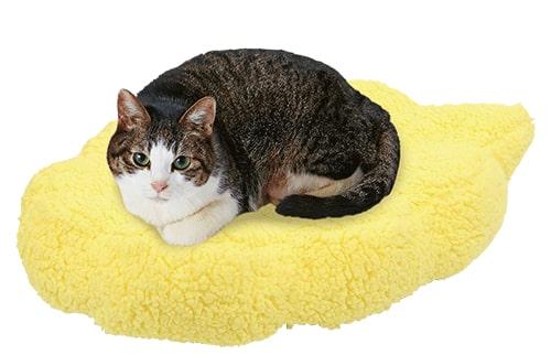 キャラペティのペット用グッズ「筋斗雲クッション」に猫が座ったイメージ