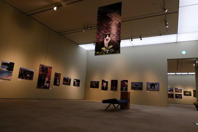 岩合光昭写真展 ほっこりネコー「やきものの里のネコ」の展示風景 by しもだて美術館