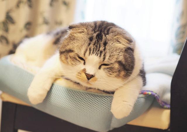 人気の猫・じゃこの寝顔 @jako0317