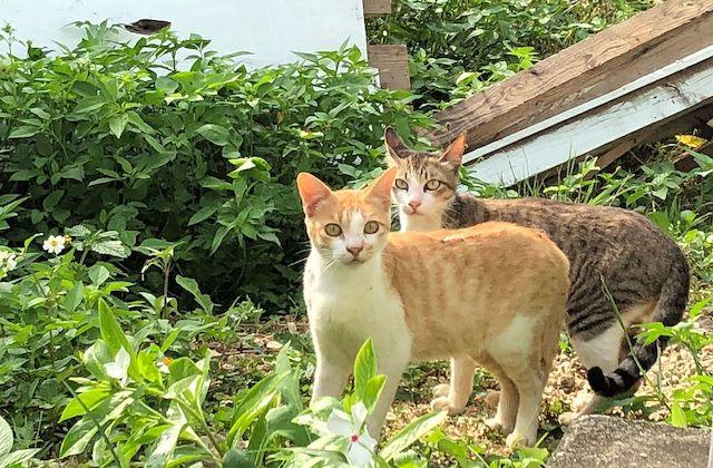宮古島の野良猫たち