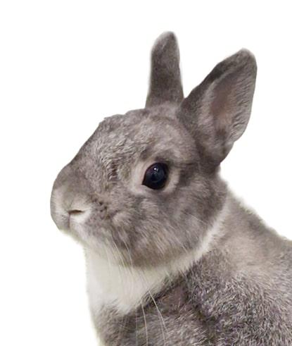 ペットのウサギの写真