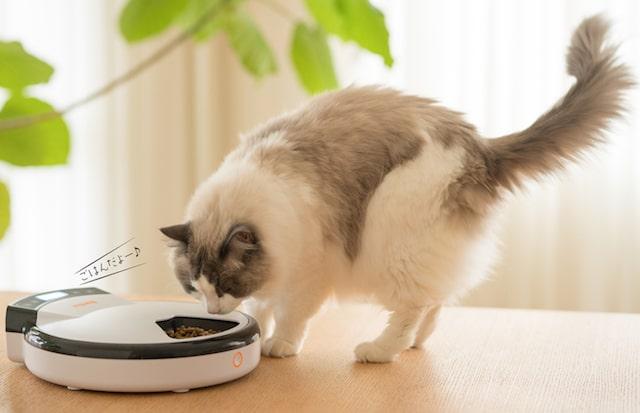 WAGWAGオートフィーダーでご飯を食べる猫