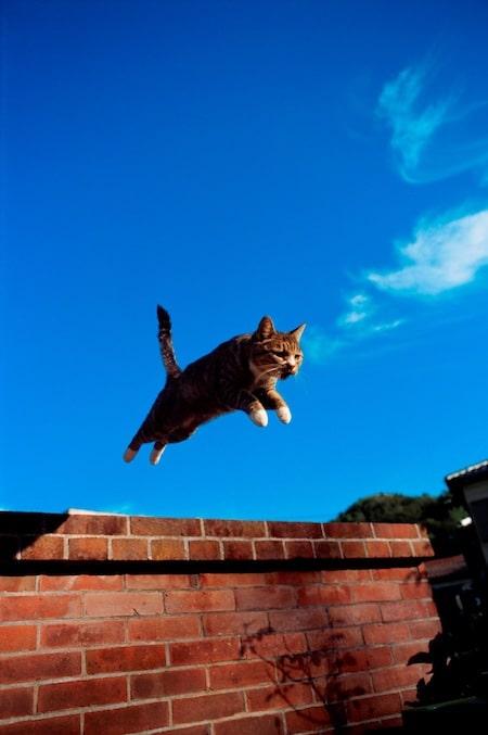 ジャンプするネコの写真 by 岩合光昭写真展 ほっこりネコー「やきものの里のネコ」