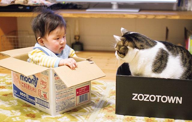 ダンボール箱に入って見つめ合う猫と人間の赤ちゃん by「ハルタとマイロ 男の子と猫はいつも仲よし」