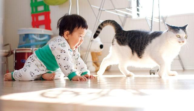 ハイハイで猫を追いかける人間の赤ちゃん by「ハルタとマイロ 男の子と猫はいつも仲よし」