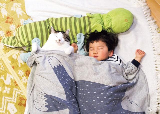 一緒に布団で眠る猫と3才児 by「ハルタとマイロ 男の子と猫はいつも仲よし」