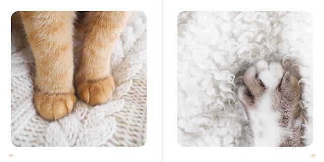 猫の手を捉えた写真 by 写真集「もっと ねこのおてて」