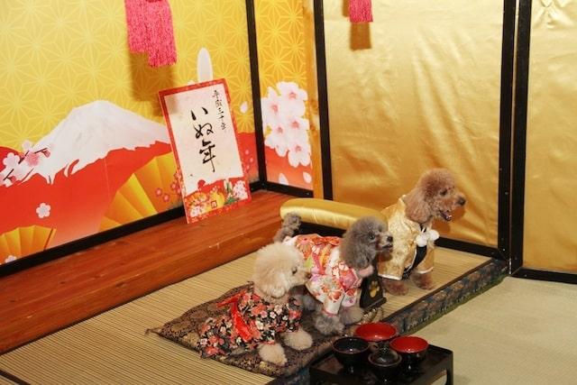 犬の撮影会 by わんにゃんドーム