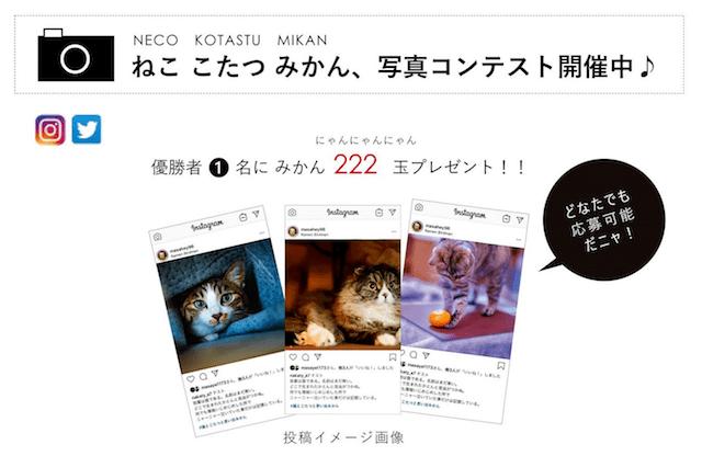 「ネコ助けフォトコンテスト」の応募イメージ