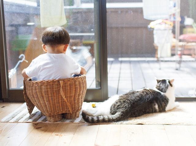 窓際にたたずむ3才児と猫の姿 by「ハルタとマイロ 男の子と猫はいつも仲よし」