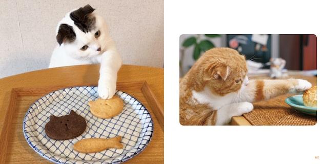 チョイチョイする猫の手を捉えた写真 by 写真集「もっと ねこのおてて」