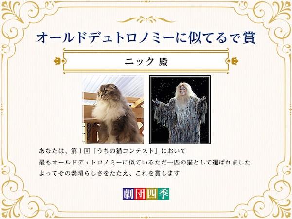 猫の写真コンテストの入賞特典イメージ by ミュージカル「キャッツ」