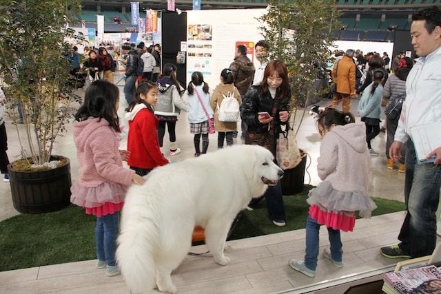 大型犬と触れ合う来場者 by わんにゃんドーム