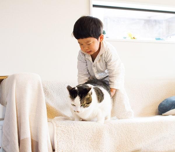 仲良くじゃれあう3才児と猫の写真 by「ハルタとマイロ 男の子と猫はいつも仲よし」
