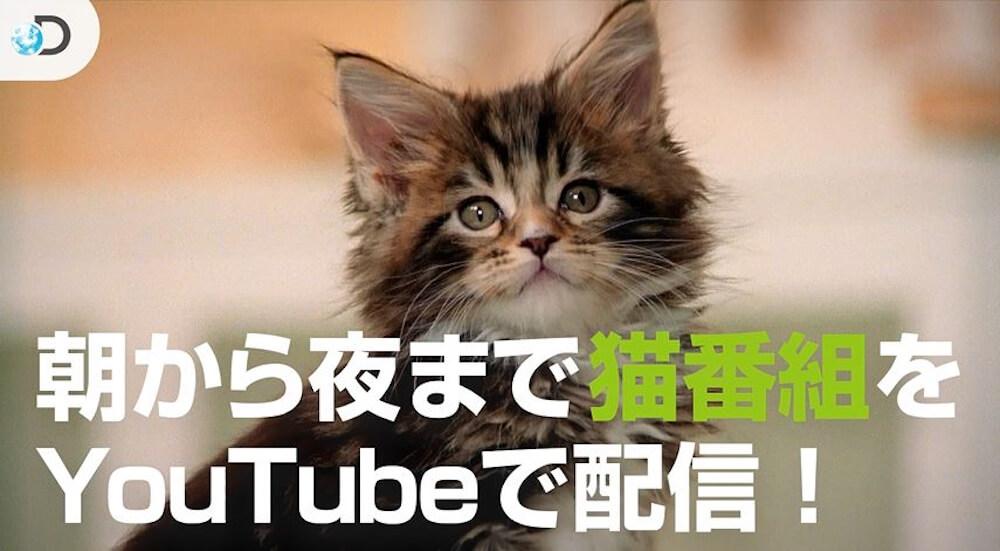 ディスカバリーチャンネルの公式YouTubeチャンネルで猫番組を配信