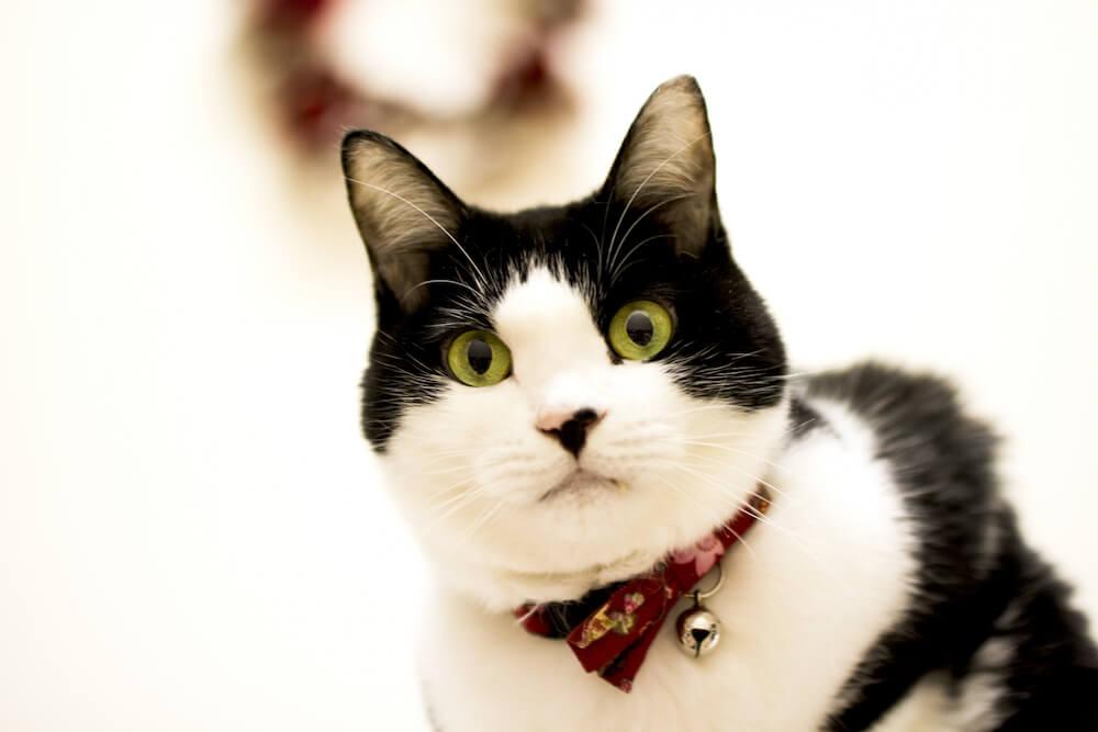 猫の日のイメージ写真