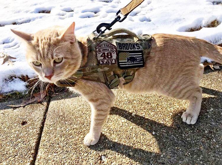 ミリタリー柄のKILONINER(キロナイナー)のハーネスを装着した茶トラ猫