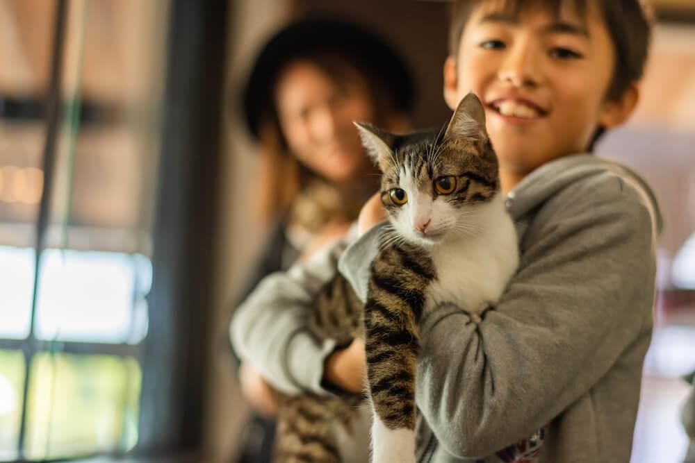 Catton(キャットン)の店内にいる保護猫は里親を募集中