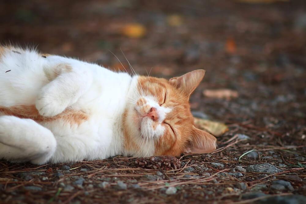 地面に横たわって気持ちよさそうに眠る猫 photo by やんにし