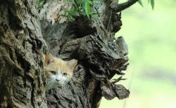 袖ヶ浦公園で暮らす猫たちの写真展「亀井拓也 地域猫作品展」が里山の禅寺で開催