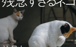 沖昌之「残念すぎるネコ」写真展が神戸で初開催!地下鉄とコラボしたスタンプラリーも