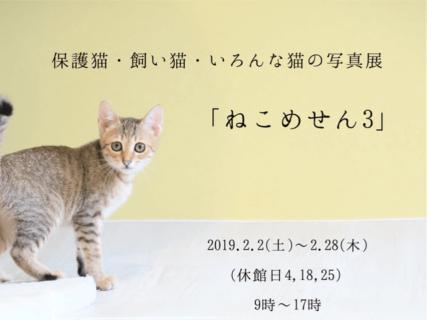 猫の日にちなんだ70点以上の写真作品を展示する「ねこめせん3」豊田市で開催中