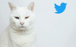 猫の日はTwitterで盛り上がるニャ!Twitterジャパンが独自企画×2を発表