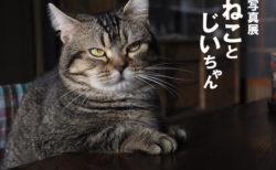 映画「ねことじいちゃん」の写真展メインビジュアル