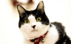 【2019年版】 企業による猫の日ネタまとめ(随時更新)