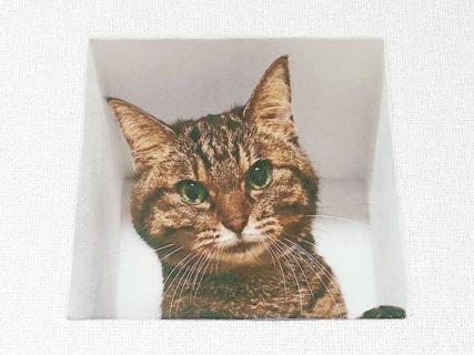 猫から見おろされたいニャ♥ トリックアートを応用したウォールステッカー