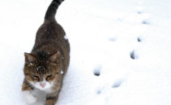 484点のネコ写真を展示、猫を愛した作家・大佛次郎の記念館で4/2まで開催