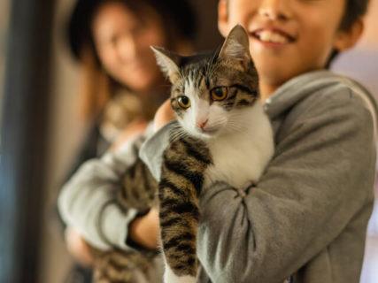 猫に優しい手作りジュエリー工房「Catton(キャットン)」が熊本にオープン
