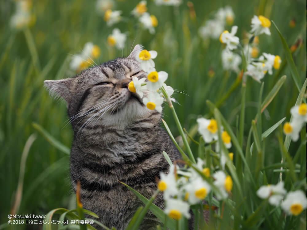 花の匂いを嗅ぐ猫 by 岩合光昭写真展「ねことじいちゃん」