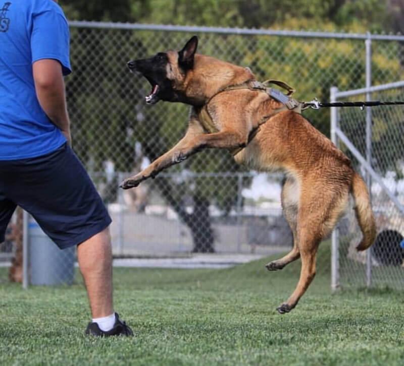 アメリカの警察犬のイメージ