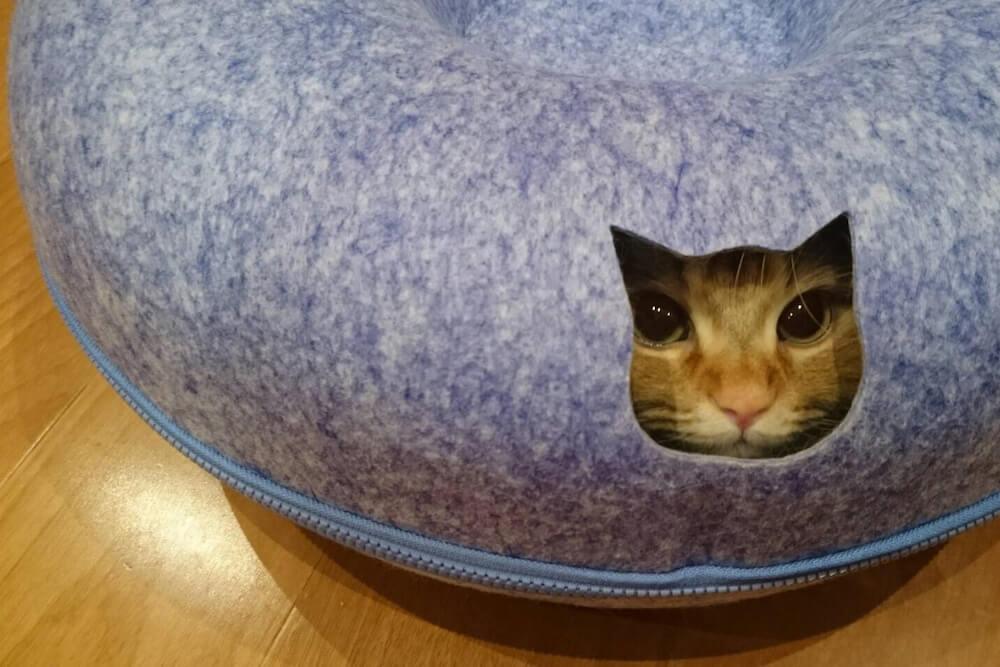 猫型の穴から覗く猫 by ドーナツ型の猫ベッド「にゃんドーナツ」