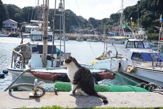 北九州の猫島・藍島の漁港にたたずむ猫