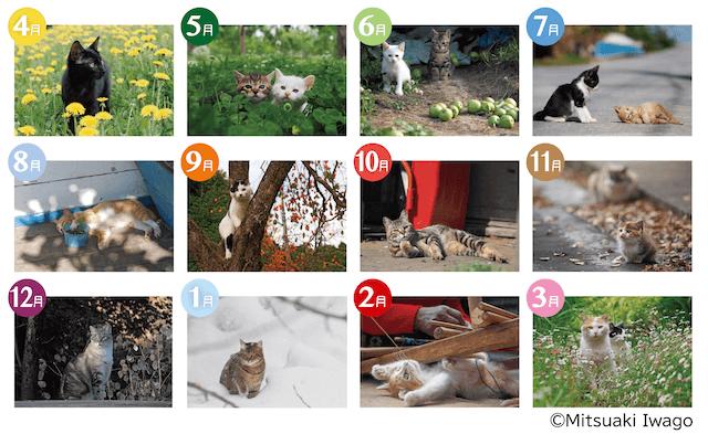 全12種類のクリアファイル by シャノアール×岩合光昭コラボグッズキャンペーン