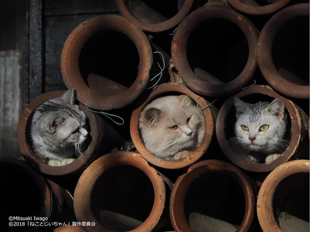 土管の中に入る猫たち by 岩合光昭写真展「ねことじいちゃん」