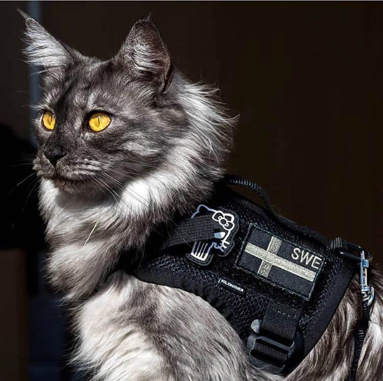 Kiloninerのハーネスを装着した猫
