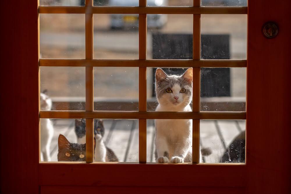 ドアの外からこちら側を見つめる猫たち photo byひさのだいすけ