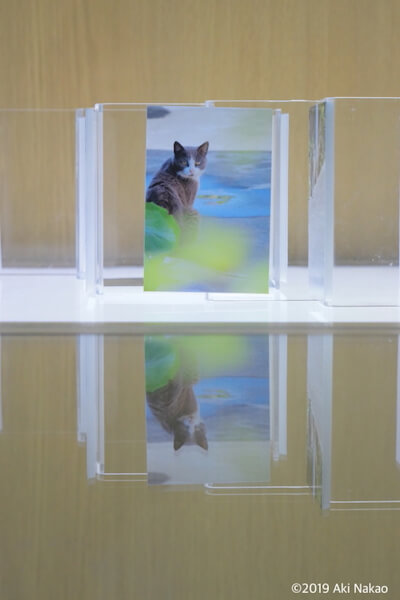 猫の写真 by nanonya.Aki(なのにゃーあき)