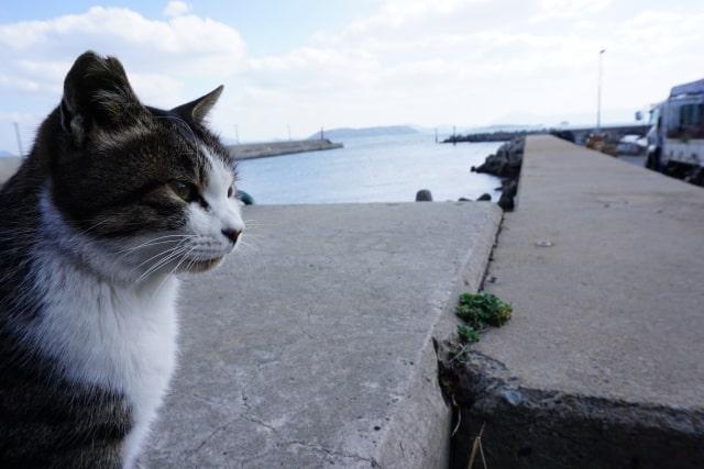 北九州の猫島・藍島の猫