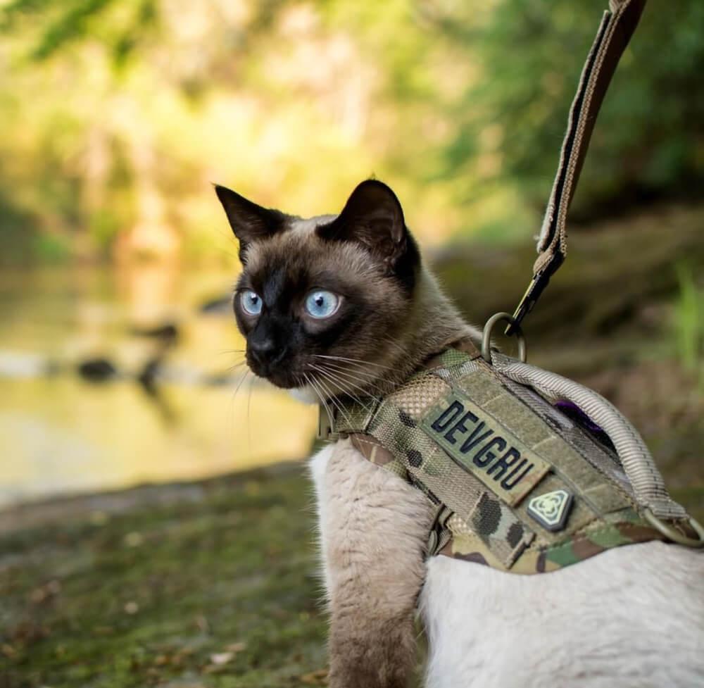 Compact K9 Dog MOLLE Vestを着用した猫 by KILONINER(キロナイナー)