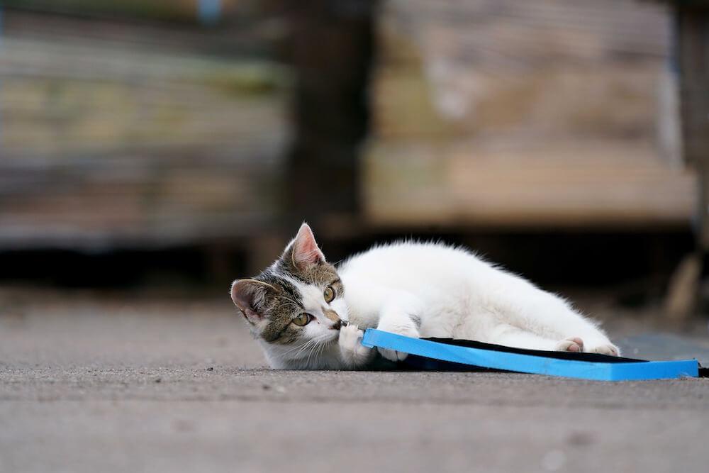 地面に横たわってじゃれる猫 photo by寺本成貴