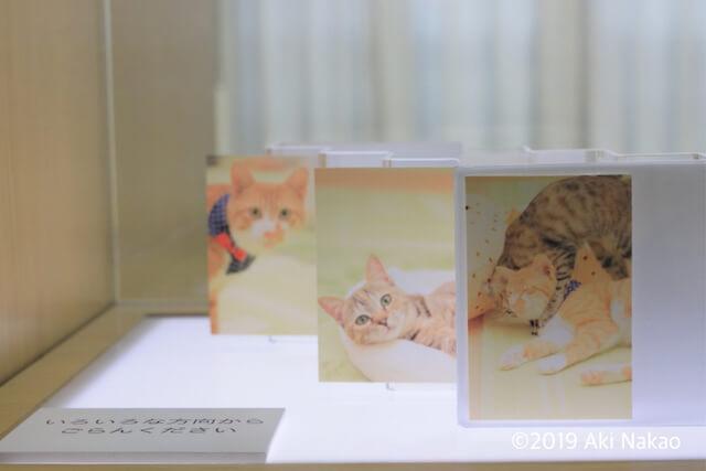 保護猫の写真 by nanonya.Aki(なのにゃーあき)