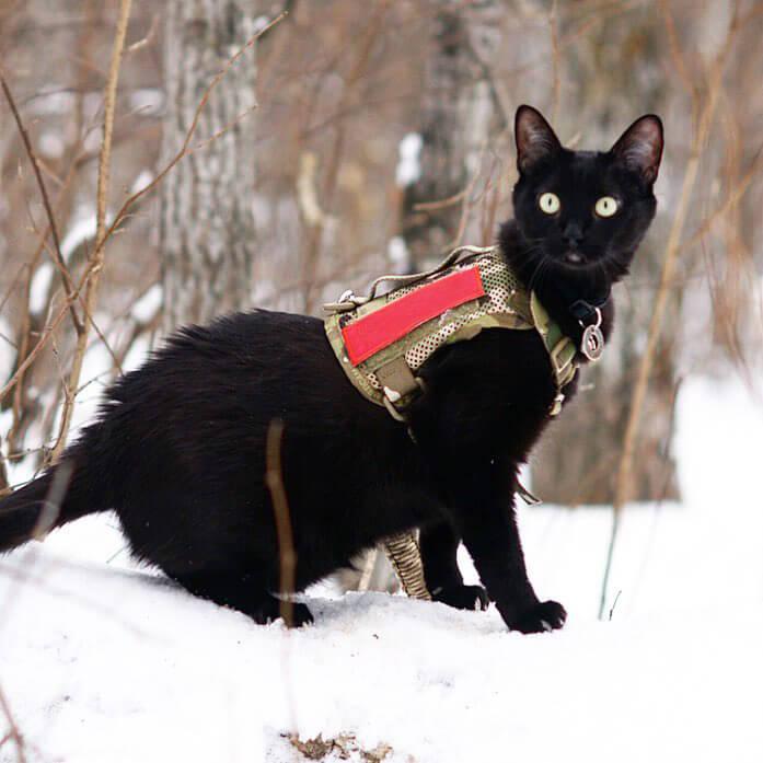 M1 Tactical Dog Harness Mesh Bodyを着用した猫 by KILONINER(キロナイナー)